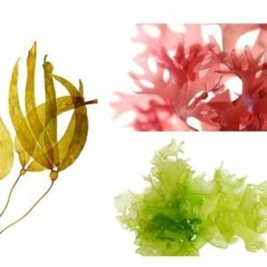 best seaweed to buy